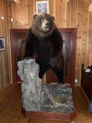 Impagliati orsa